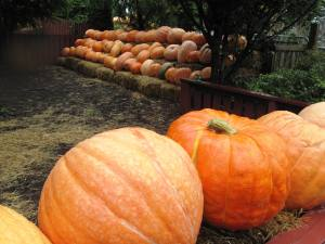 Pumpkins of all colour ans sizes