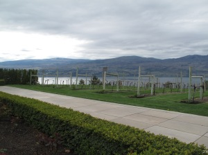 Lake & vineyard view